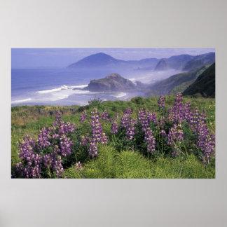 Los E.E.U.U., Oregon, playa de Nesika. Lupine y Or Póster