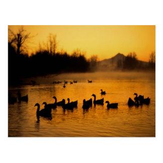 Los E.E.U.U., Oregon, Portland. Aves acuáticas en Postales
