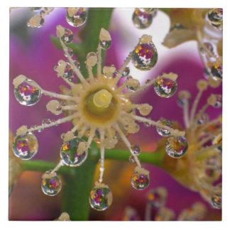 Los E.E.U.U., Oregon, Portland. Las flores del cos Azulejo Cuadrado Grande