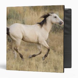 "Los E.E.U.U., Oregon, Seneca, rancho de Ponderosa. Carpeta 1 1/2"""