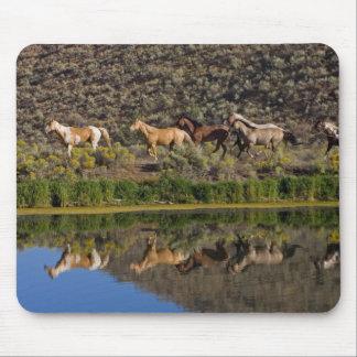 Los E.E.U.U., Oregon, Seneca, rancho viviendo en l Mouse Pad