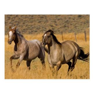 Los E.E.U.U., Oregon, Seneca, rancho viviendo en Postal