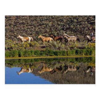 Los E.E.U.U., Oregon, Seneca, rancho viviendo en Postales