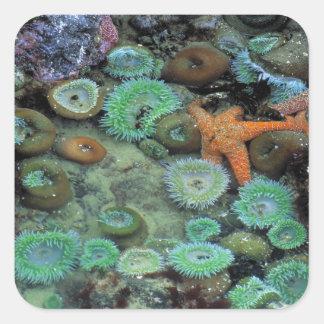 Los E.E.U.U., Oregon, SP de Nepture. Una estrella Calcomanía Cuadradase