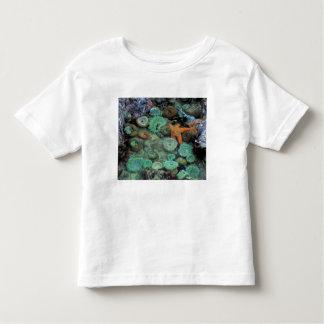 Los E.E.U.U., Oregon, SP de Nepture. Una estrella T-shirt
