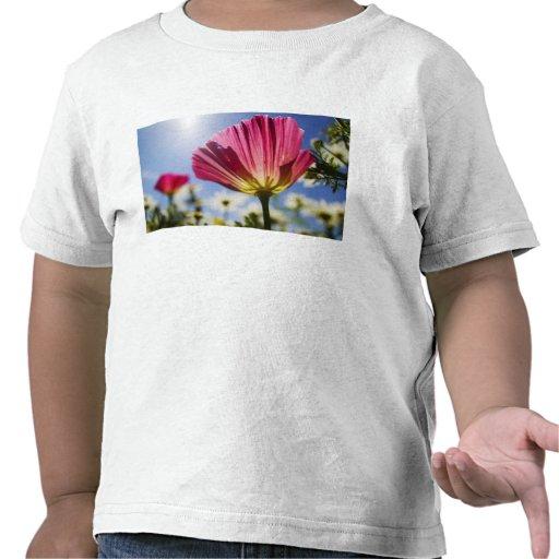 Los E.E.U.U., Oregon, valle de Willamette, cierre Camisetas