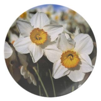 Los E.E.U.U., Oregon, valle de Willamette. Narciso Platos