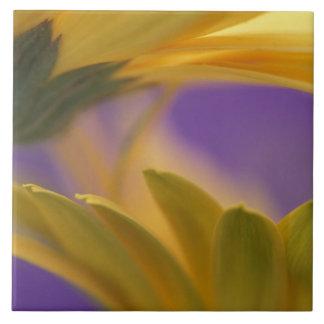 Los E.E.U.U., Pennsylvania. Margaritas amarillas d Azulejo Cuadrado Grande