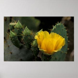 Los E.E.U.U., Tejas, cactus del higo chumbo en la  Impresiones
