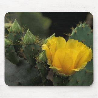 Los E E U U Tejas cactus del higo chumbo en la Tapete De Raton