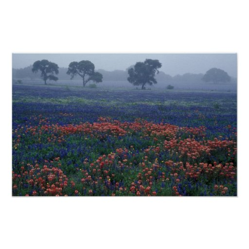 Los E.E.U.U., Tejas, cerca de la niebla de Lytle,  Posters