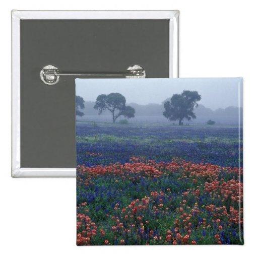 Los E.E.U.U., Tejas, cerca de la niebla de Lytle,  Pin