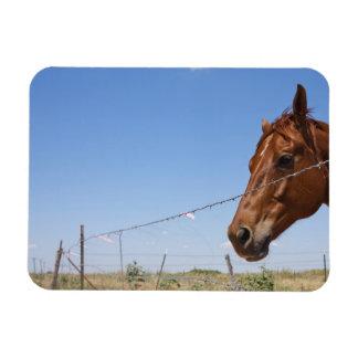 Los E.E.U.U., Tejas, Chillicothe, caballo se coloc Iman De Vinilo