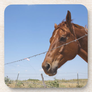 Los E.E.U.U., Tejas, Chillicothe, caballo se Posavasos
