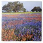 Los E.E.U.U., Tejas, Llano. Bluebonnets y redbonne Azulejo Cuadrado Grande