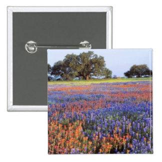 Los E.E.U.U., Tejas, Llano. Bluebonnets y redbonne Pin Cuadrado