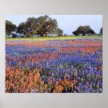 Los E.E.U.U., Tejas, Llano. Bluebonnets y redbonne Póster