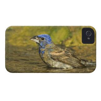 Los E.E.U.U., Tejas, valle del Rio Grande. Azul iPhone 4 Case-Mate Cobertura