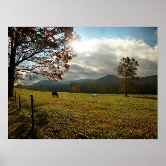 Los E.E.U.U., Tennessee. Caballos en valle de la Póster