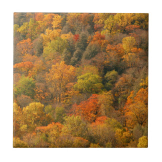 Los E.E.U.U., Tennessee. Follaje de otoño 2 Azulejo Cuadrado Pequeño