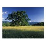 Los E.E.U.U., Tennessee. Grandes montañas 3 de Smo Postal