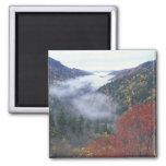 Los E.E.U.U., Tennessee, grandes montañas de Smoke Imán Cuadrado