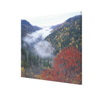 Los E.E.U.U., Tennessee, grandes montañas de Smoke Lona Estirada Galerías