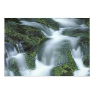 Los E.E.U.U., Tennessee, Great Smoky Mountains NP Fotografías