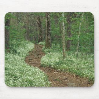 Los E.E.U.U., Tennessee, Great Smoky Mountains NP, Tapetes De Ratón
