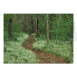 Los E.E.U.U., Tennessee, Great Smoky Mountains NP, Tarjeta De Felicitación