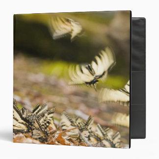 Los E.E.U.U., TN, Tellico. Mariposas de Swallowtai