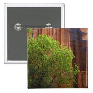 Los E.E.U.U., Utah, acantilados del bermellón del  Pin