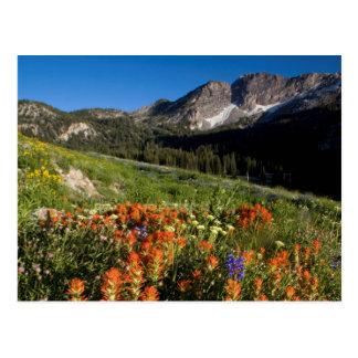 Los E.E.U.U., Utah, bosque del Estado del Tarjetas Postales