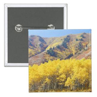 Los E.E.U.U., Utah, bosque del Estado del Wasatch- Pin Cuadrado