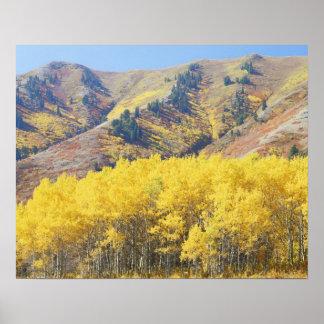 Los E.E.U.U., Utah, bosque del Estado del Wasatch- Póster