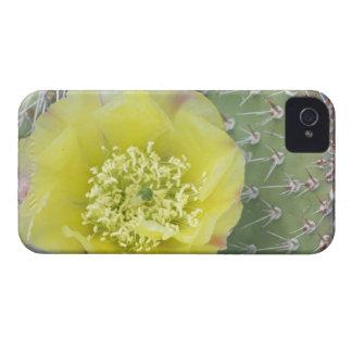 Los E.E.U.U., Utah, Canyonlands, NP, higo chumbo iPhone 4 Protector