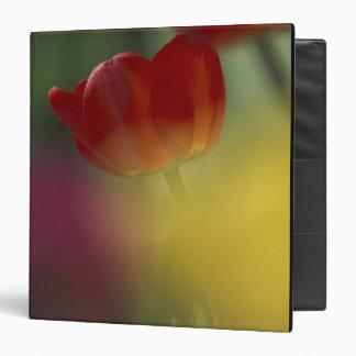Los E E U U Utah tulipanes del valle del escond
