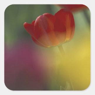 Los E.E.U.U., Utah, tulipanes del valle del escond Etiquetas