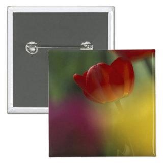 Los E.E.U.U., Utah, tulipanes del valle del escond Pin Cuadrado