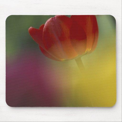 Los E.E.U.U., Utah, tulipanes del valle del escond Tapete De Ratón
