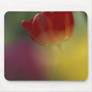 Los E.E.U.U., Utah, tulipanes del valle del escond Tapetes De Raton