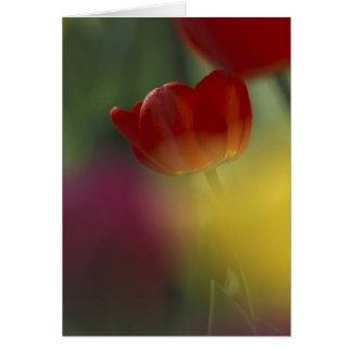 Los E.E.U.U., Utah, tulipanes del valle del escond Tarjeta