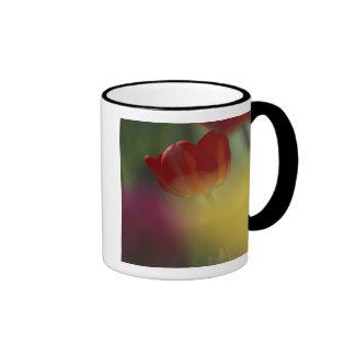 Los E E U U Utah tulipanes del valle del escond Tazas De Café