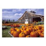 Los E.E.U.U., Vermont, Shelbourne, calabazas Impresión Fotográfica