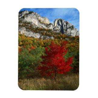 Los E.E.U.U., Virginia Occidental, rocas Spruce Iman De Vinilo