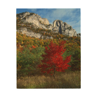 Los E.E.U.U., Virginia Occidental, rocas Spruce Cuadros De Madera