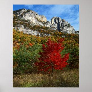 Los E.E.U.U., Virginia Occidental, rocas Spruce Póster