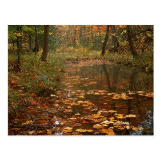 Los E.E.U.U., Virginia, otoño en parque de estado Postal