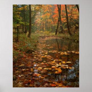 Los E.E.U.U., Virginia, otoño en parque de estado Póster