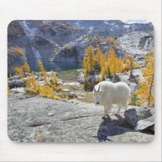 Los E E U U WA encantamientos alpinos del desie Tapete De Raton